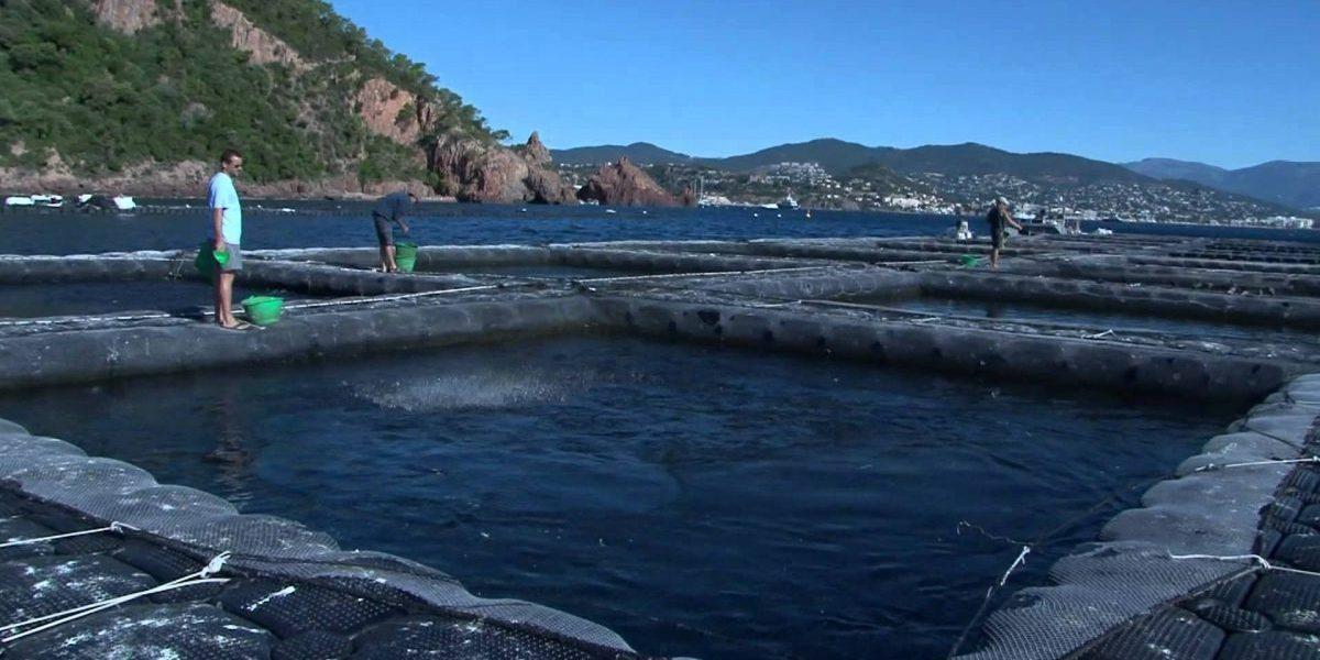 Permalien vers:Production aquacole