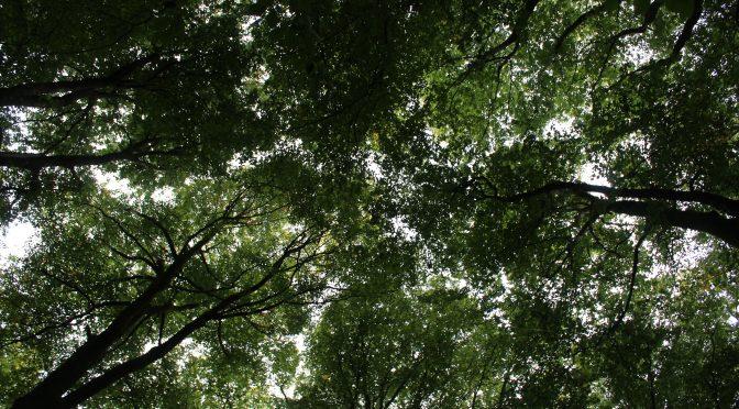 La forêt, les racines de la solidarité