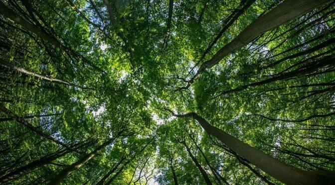 La Forêt, une solidarité naturelle.