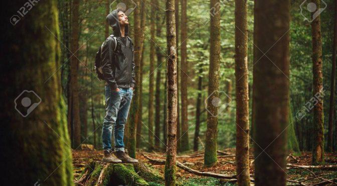 Société Forestière: La nature une valeur sûre