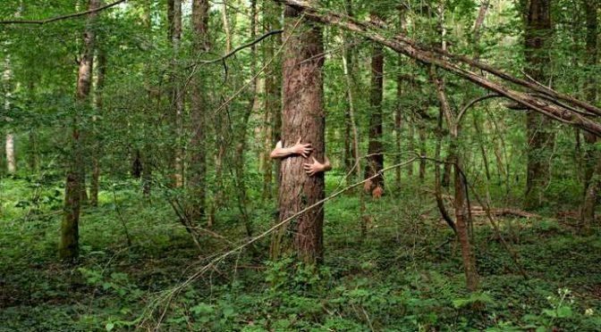 Le chant de la forêt : une chanson solidaire ?