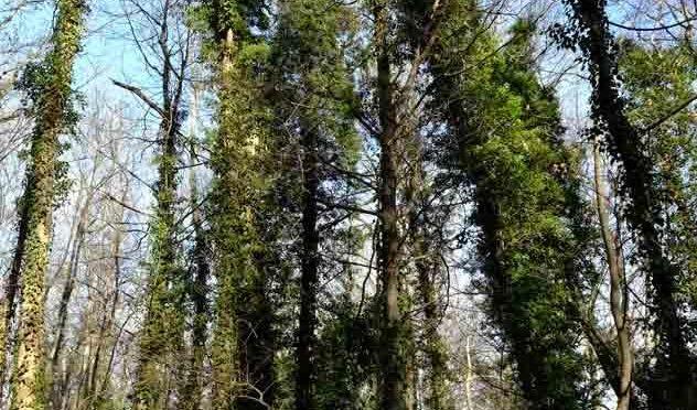 La solidarité forestière, un modèle impossible pour notre société