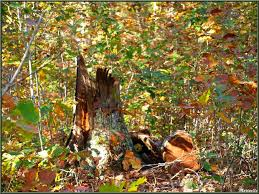 Comme une feuille bercée par le vent, chaque arbre ne trouve pas sa place