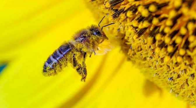 Les ruches connectées du futur !