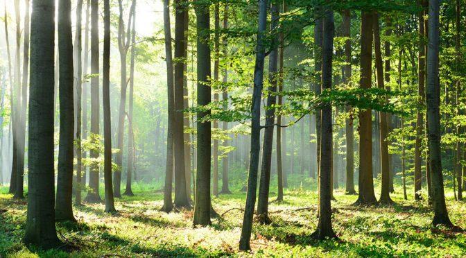 La forêt, une société à part entière
