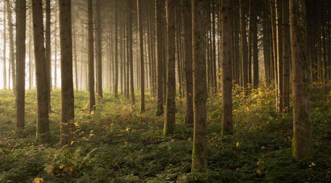 Une société verte, libre et connectée : La forêt