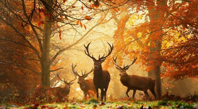 La forêt : société idéale ou écran de fumée